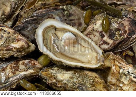 Fresh raw closed Pacific oysters, Japanese oysters full frame and an open one close up