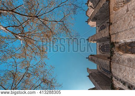 Bottom View Of Blossoming Trees And Chirch Facade In Plaza Del Pi, Barcelona
