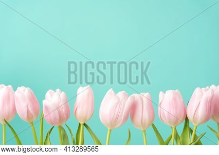 Row Of Beautiful Tulips Of Gentle Pastel Pink Color On Blue Background. Banner, Greeting Card For Ho