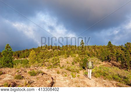Young Woman Hiker With Backpack From Behind Hiking In Forest. Female Trekker Backpacking In Nature.