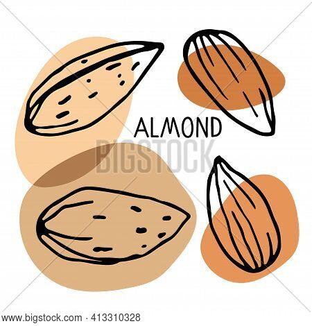Almond Set. Hand Drawn Vector Nut And Almond Text. Doodle Sketch With Colored Spots. Organic, Fresh