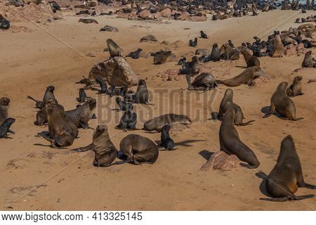 Colony Of Fur Seals At Cape Cross At The Skelett Coastline Of Namibia At The Atlantic Ocean, Cape Cr