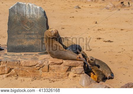 Cape Cross, Namibia - Jan 12, 2020: Colony Of Fur Seals At Cape Cross At The Skelett Coastline Of Na
