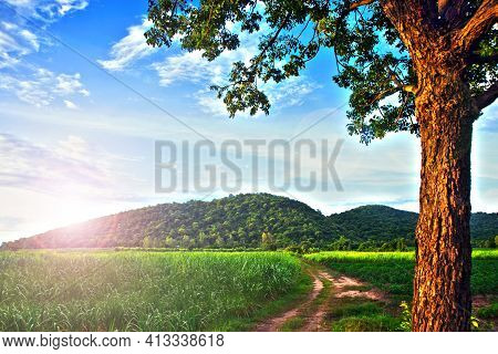 Landscape Hdr Image Of Farm Crops When The Sun Shines With Big Trees In Foreground And Mountains In