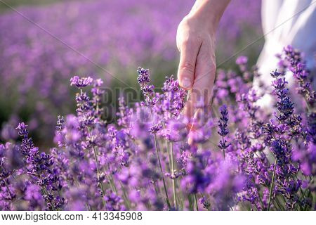 Close Up On Hand Of Happy Young Woman In White Dress On Blooming Fragrant Lavender Fields With Endle