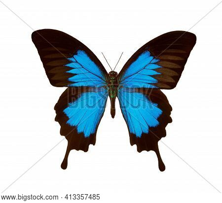Butterfly Ulysses Isolated On A White. Colorful Tropical Butterfly.