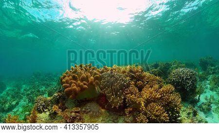 Underwater Fish Garden Reef. Reef Coral Scene. Coral Garden Seascape. Philippines.