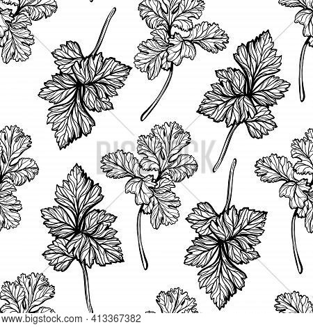 Parsley Pattern. Aromatic , Healthy Herbs. Hand-drawn Vector Illustration