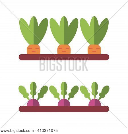 Vegetable Garden. Carrots, Radishes, Beets. Vector Illustration Isolated On White Background