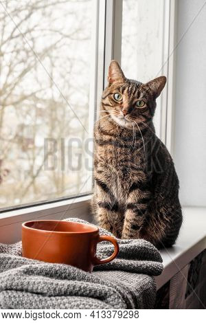 Tabby Cat Sits And Looks Out The Window With Winter View. Bengal Cat. Space For Text. Warmth And Hom