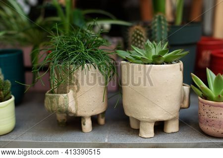 Houseplants In Pots On Terrace. Plant Care. Green Rhipsalis And Agave Succulent Plant In Pots. Home