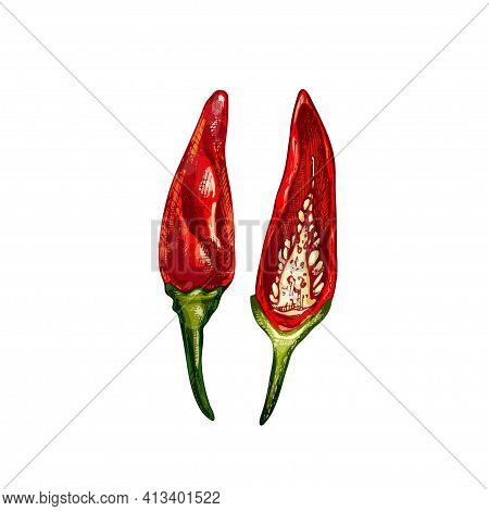 Whole And Half Pepper Tabasco. Vector Vintage Hatching Color Illustration. Isolated On White Backgro