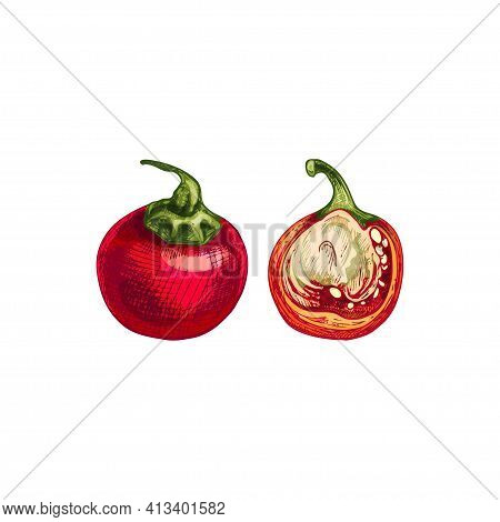 Whole And Half Cherry Pepper. Vector Vintage Hatching Color Illustration. Isolated On White Backgrou