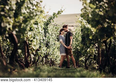 Young Amorous Couple Holding Hands In Middle Of Vineyards On Sunny Day.both Man And Woman Stand In C