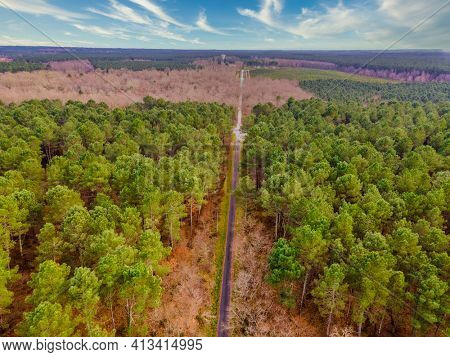 Aerial view of pine tree forest in the Gironde department near Bordeaux in France.