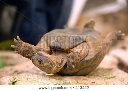 Overturned Turtle