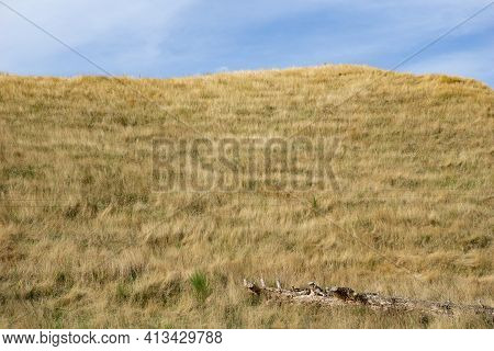 Summer Dry Golden Grass On Hill With Log In Rural New Zealand.
