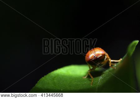 Closeup Of Blow Fly Or Carrion Fly Calliphoridae, Closeup Of Blow Fly Or Carrion Fly Calliphoridae