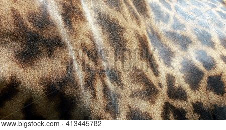 Close Up Of A Giraffe Skin Pattern, The Skin Of A Giraffe Texture Background