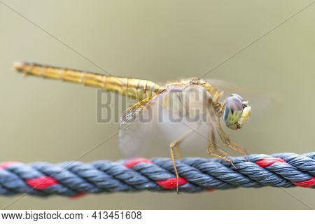 Close Up Detail Of Dragonfly With Blur Background. Selective Focus On The Eye