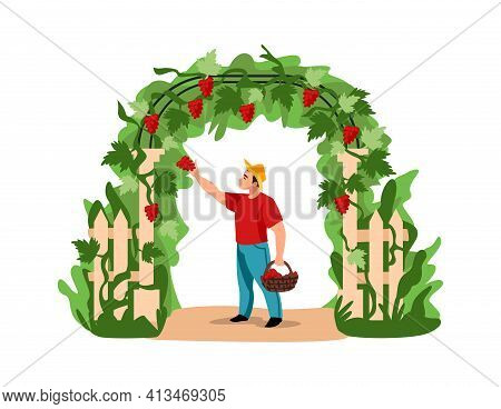 Harvesting. Cartoon Man Picking Grapes. Character Holding Basket Full Of Berries. Agricultural Worke