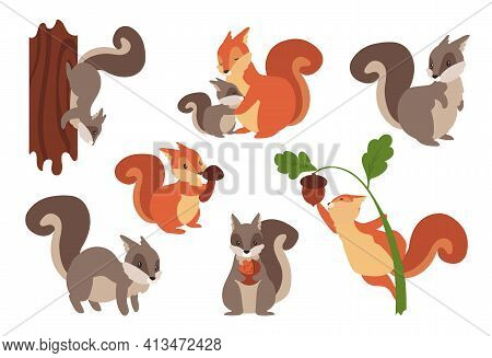Squirrel. Cartoon Wild Furry Animals Playing With Nuts And Acorns, Climbing On Tree Or Holding Mushr