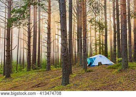 Overnight In A Tent In The Forest. Foggy Morning In A Pine Forest. A Man Lives In A Tent In The Summ