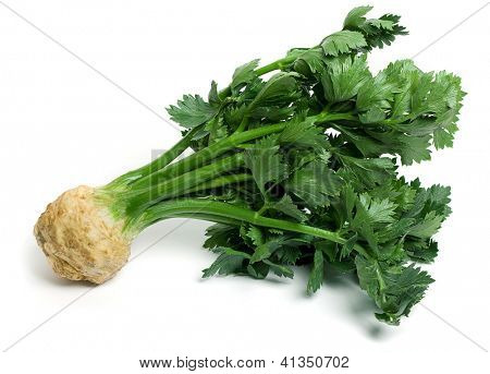 Fresh celery root with leaves on a white background