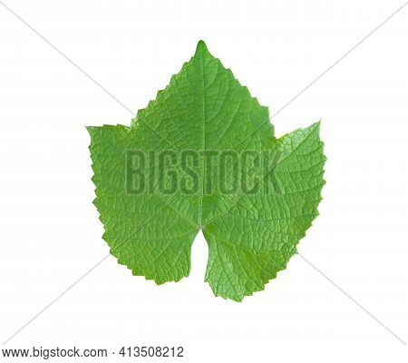 Grape Leaf Isolated On White Background. Perfectly Crafted Grape Leaf For Use In Collage