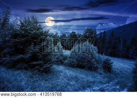 Trees On The Hill In Summer Scenery At Night. Beautiful Mountain Landscape In Full Moon Light
