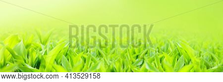 Beautiful Spring Tree Forest Landscape And Fresh Green Leaves Of Plants On Ground