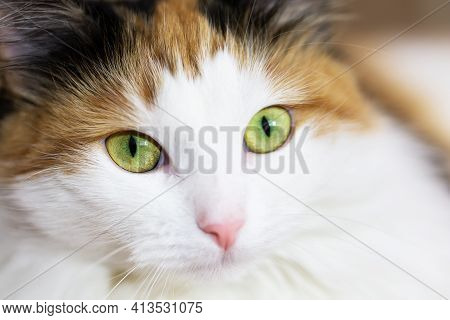 Close Up View Of  White Cute Kitten With Green Eyes.