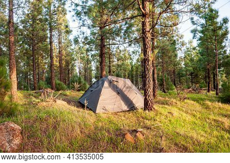 Green Tent Camping On Rocky Campground Under Bright Green Pine Trees In Forest. Backpacking In Natur