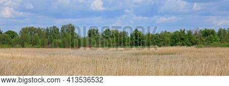 Spring In The Ukrainian Woodland. April. Spring Landscape. Nature Wakes Up After Winter. Bright Gree