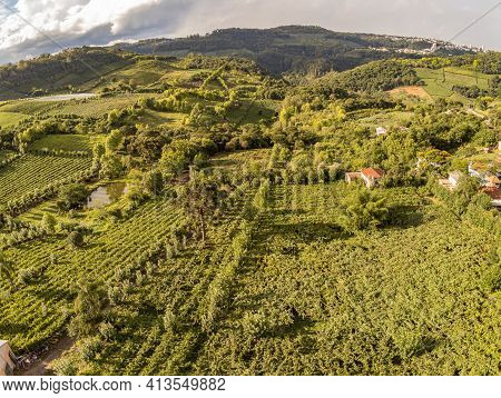 Vineyards And Village In Valley