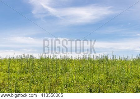 Farm Field And Blue Sky, Pinto Bandeira, Rio Grande Do Sul, Brazil