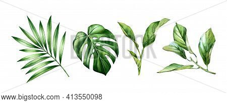 Watercolor Leaves Set. Tropical Citrus, Palm, Monstera Leaves. Exotic Tree Branches Isolated On Whit