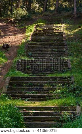 Lush Forest Landscape With Stairs. Forest Path With Trees And Lush Vegetation With Steps To Walk.