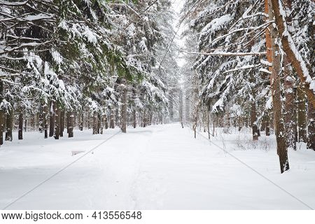 Winter Path Among Trees In Snowy Forest. Natural Winter Forest Landscape In Day Sunlight.