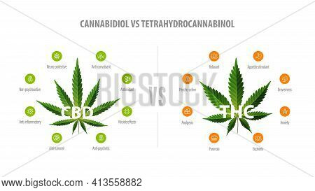 White Banner With Comparison Cbd And Thc. Cbd Vs Thc, List Of Differences With Icons And Green Leafs