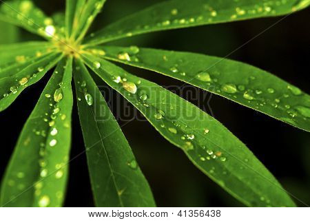Green Foliage Holding Water Drops