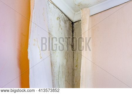 Aspergillus Niger, Black Mold Occurs In Damp, Unventilated Rooms, In Corners And Under Wallpaper