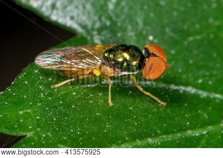 Macro Photography Of Beautiful Fly On Green Leaf