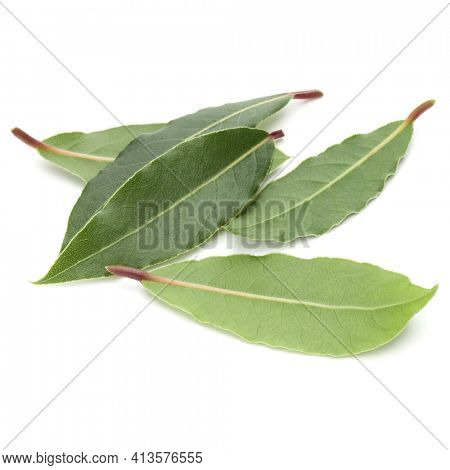 Aromatic bay leaves isolated over white background cutout