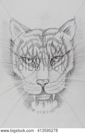 Pencil Drawing Of A Tiger On White Paper. Portrait Of An Animal With A Grin And A Long Mustache. Han