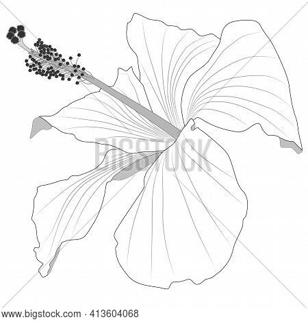 Close-up Image Of A Hibiscus Flower In Grey Vector Illustration