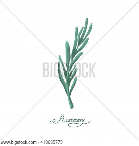 Rosemary Spice On A White Background Is Isolated. Rosemary Herb With