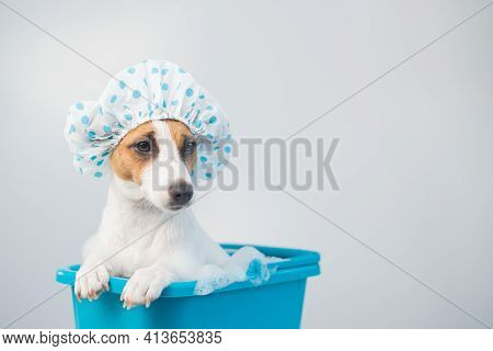 Funny Friendly Dog Jack Russell Terrier Takes A Bath With Foam In A Shower Cap On A White Background