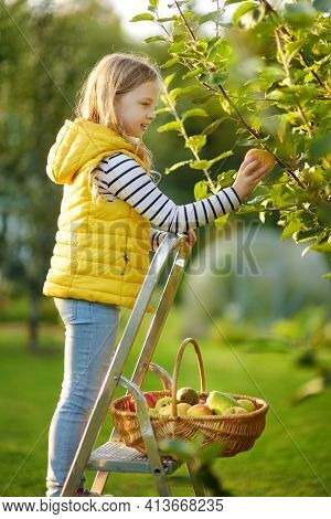 Cute Young Girl Harvesting Apples In Apple Tree Orchard In Summer Day. Child Picking Fruits In A Gar