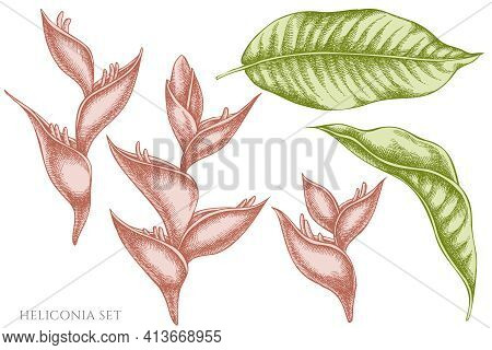 Vector Set Of Hand Drawn Pastel Heliconia Stock Illustration